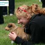 Beautiful contact between a girl and her sheltie puppy at MissionPuppy