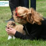 Girl and puppy preparing for team training at MissionPuppy