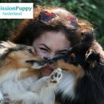 Girl hugging two Shelties from MissionPuppy